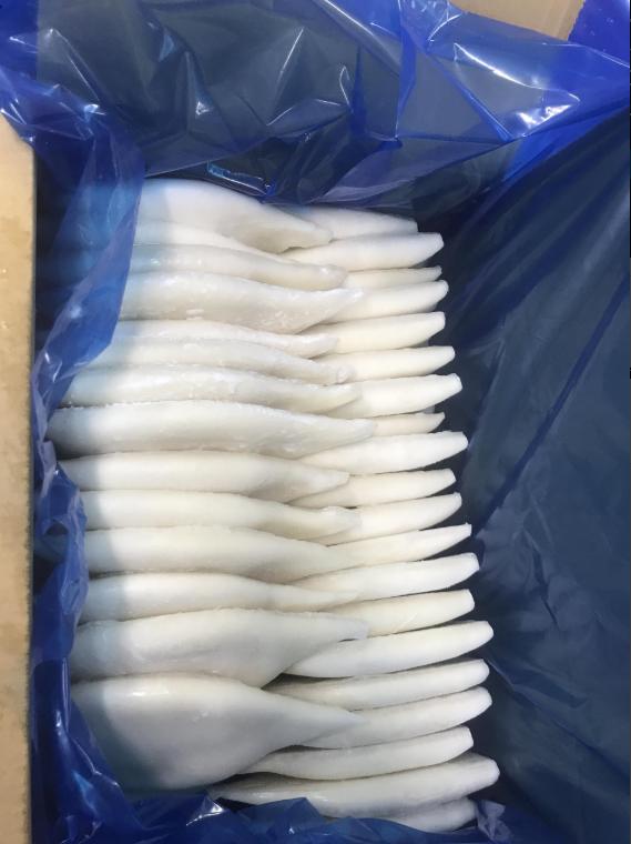 loligo squid tube