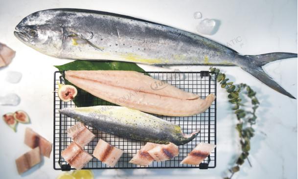 鲯鳅鱼系列