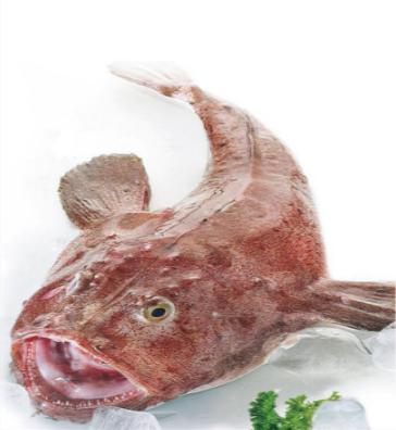 安康鱼系列