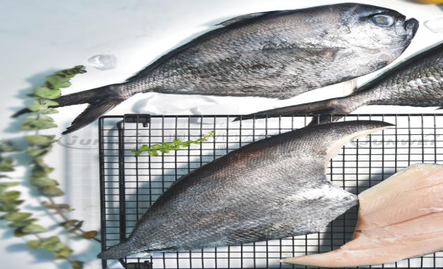 冻乌舫鱼系列