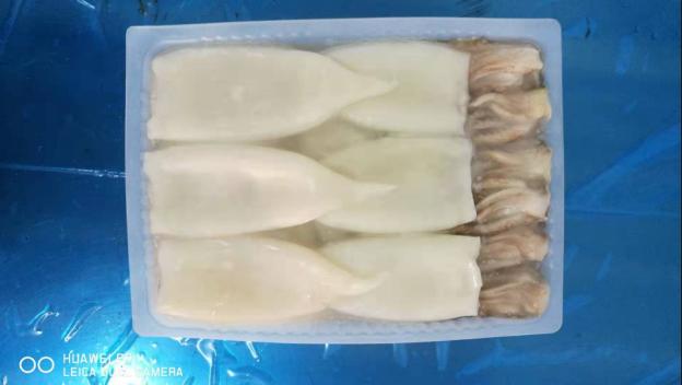 鱿鱼T+T