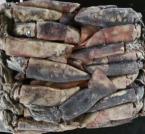 1.Peru/ Ecuador/Chile Open sea  Dosidicus gigas Whole Squid
